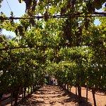 Foto de Wilson Creek Winery