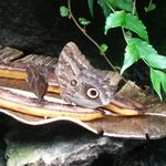 Foto di Butterfly Rainforest