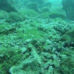 Adventure Divers Foto