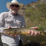 Nice Brown Trout!