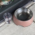 No coffee but fresh water for your canine companion