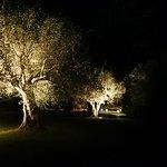 Nachtbeleuchtung der Olivenbäume