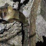 mouse lemur seen on night walk