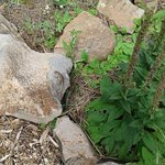 Foto de The Arboretum at Flagstaff
