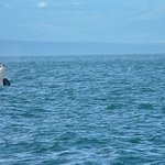 We watched the Orca and she watched us!