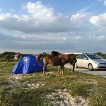 Campsite and horses hanging around.