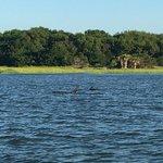Photo de Captain Mike's Dolphin Tours