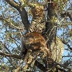 Photo de Motswari Private Game Reserve
