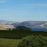 Maryhill Winery Foto