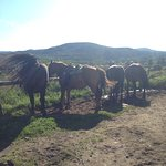Photo de Camping et Ranch du Fjord