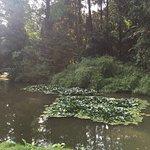 Simeria Arboretum Foto