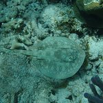 Beachcomber Grand Cayman Photo