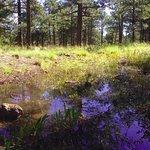 Beautiful pine grove