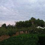 Foto di Borgo Pida