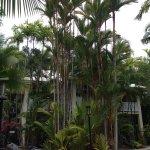 Photo de Port Douglas Retreat