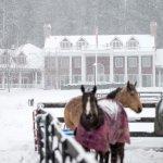 Gorgeous winter wonderland
