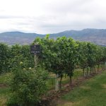Photo of Mission Hill Family Estate Winery