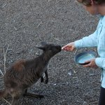 Eleanor River Homestead - Kangaroo Island Foto