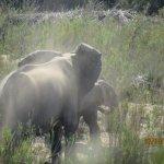 Pestana Kruger Lodge Foto