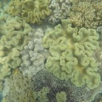 Picture of (part) of the reef