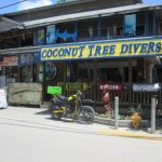 Coconut Tree Divers Foto