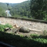 View out restaurant window-ground hog eating bird food, mountains & river