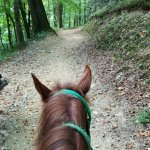 Sugarland Riding Stables