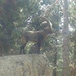 Photo de Parc animalier des Angles