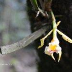 Photo de Orquigonia