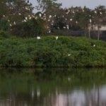 Hapimag Residenz Orlando - Lake Berkley Foto