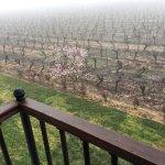 2nd floor room overlooking the vineyards morning fog.