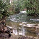Up river from Whatcom Falls, Bellingham WA