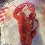Shore Club Lobster Supper Foto