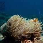 Photo de P.P. Aquanauts Scuba