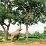 Elephants at mole park-grassroottours