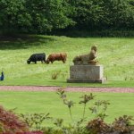 Peacock, Highland Cattle and Antiquities