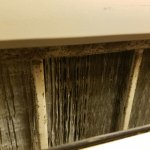 Mold on HVAC unit