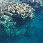 Agincourt Reef Foto