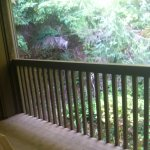 My private terrace looking at the woods, room 309 or 310