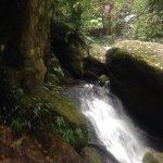 Photo de O'Reilly's Rainforest Retreat, Mountain Villas and Lost World Spa