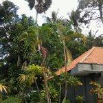 Sayan Kubu Resort