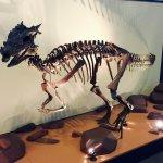 Wonderful Dino Exhibit Area