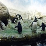 Indianapolis Zoo Foto