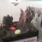Insectarium, тараканы