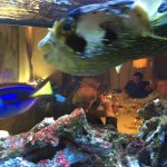 pet fish at Basho