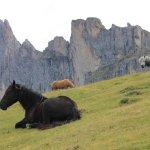 Alpenheim Foto