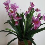 Large and cheery silk orchid arrangement...and dust free, too!