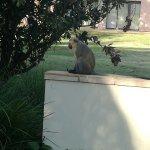AVANI Gaborone Hotel & Casino Foto