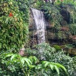 Waterfalls at the Gaylord gardens
