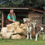 Mauro and the goats at Swiss Lodge